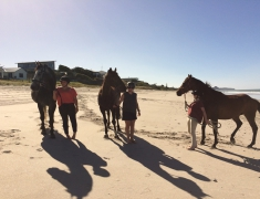 Horses at The Pukehina Beach