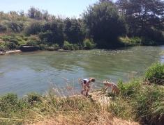 Local riverbank - fishing for Mackeral