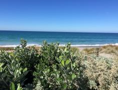 Pukehina Beach (4)