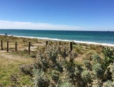 Pukehina Beach - Looking through Park