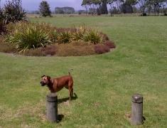 Dog at Pukehina