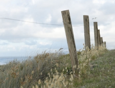Fences and Dunes on the beach