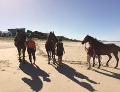 Horses at The Pukehina Beach